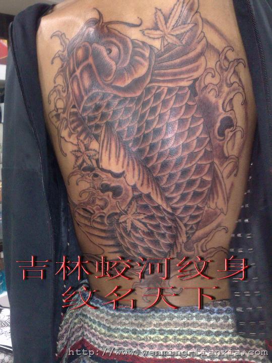 满背锦鲤 -若蓝刺青——上海闸北纹身社|上海宝山刺青