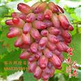 山东临沂葡萄苗价格是多少?